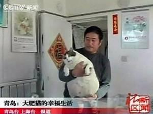 В китайской провинции Шаньдун живет кот, который весит 15 кг (ФОТО)