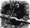 Семейство мягкохвостых обезьян (Pithecidae)