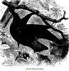 Рукокрылые (Chiroptera). Семейство летучих собак, или плодоядных летучих мышей (Pteropina).