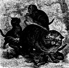 Хищники. Семейство кошек (Felidae). Дикая кошка (Felis catus)