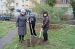 Сотрудники администрации сажали деревья в день народного единства