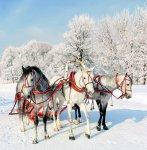 Новогодняя песня: Три белых коня