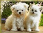 Новогодняя песня: Котенок и Щенок