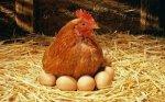 Поголовье птицы в Ростовской области сократилось на 40%