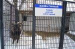 Как переносят зиму животные в белокалитвинском зоопарке