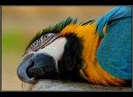 Жители Ростовской области могут заразиться от попугаев и канареек опасной болезнью