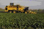Поддержка в области растениеводства отделом сельского хозяйства Белокалитвинского района