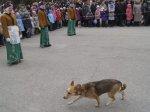 Белокалитвинской думой утверждены правила содержания собак и кошек