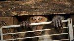 В Таиланде арестовали ростовчан, за незаконную организацию бизнеса с использованием обезьян