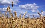 Волгоградским аграриям выделят около 1 миллиарда рублей для проведения посевной компании