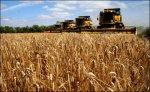 Три донских  сельхозвуза Ростовской области планируют объединить