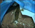В Краснодарском крае  сотрудник наркоконтроля, хранил в своем гараже наркотики