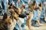 В майские праздники, ростовчан будут охранять 3 тысячи полицейских