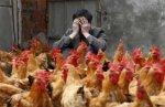 Новый грипп птиц и меры его профилактики