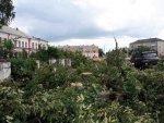 В Волгограде вырубили деревья на 34 миллиона рублей