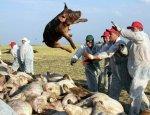 Беларусь обьявила о запрете на ввоз свинины из Ростовской области