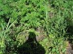 Употребление наркотиков влечет уголовную ответственность