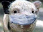 В Волгоградской области зафиксировали вспышку африканской чумы свиней