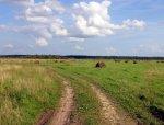 В Михайловском районе Волгоградской области  состоялся День поля