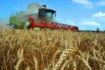 Правительство РФ направит аграриям Краснодарского края  6,4 млрд рублей господдержки