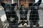 В Сочи откроется муниципальный приют для бездомных животных