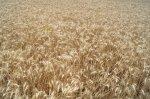 Порядок ведения сельхозработ и обработка полей в Белокалитвинском районе