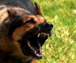 Под Волгоградом собака загрызла насмерть маленькую девочку