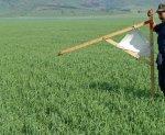 Бесхозные земли в Ростовской области отдадут под дачи и огороды