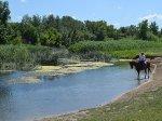 В Волгограде обработают около 100 водоемов от комаров