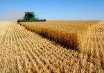 В Ростовской области убрано 83% зерновых от уборочной площади