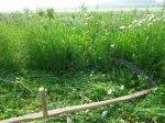 В Ростовской области мужчина чуть не убил косой пятилетнего ребенка