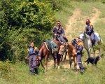 Лошадям для работы на Олимпиаде в Сочи введут под кожу электронные чипы