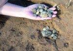 Под Астраханью нашли уникальный клад в 500 монет