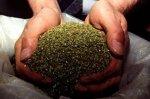 В Каневском районе наркополицейские изъяли  7 килограмм марихуаны