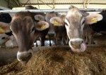 Ростовская область - лидер в реализации программ поддержки начинающих фермеров и семейных ферм