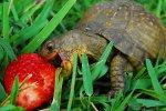 Товары для черепах и других домашних животных