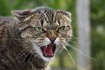 В двух районах Ростовской области обнаружено бешенство у бездомных котов