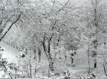 В Ростовской области ожидается сильный снегопад из-за циклона