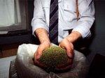 В Сальске у местного жителя обнаружили около 4 кг марихуанны