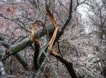 Власти Краснодара призывают горожан принять участие в расчистке улиц от упавших веток