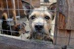 В Ростове экс-директор ростовского центра безнадзорных животных похитила 5млн рублей