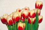 Поздравление  с 8 марта от редакции Калитва.ру всем женщинам