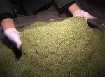 В краснодарском крае местный житель хранил  в гараже 5 кг марихуанны