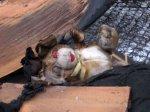 На территории ЮФО наблюдается рост гибели детей на пожарах