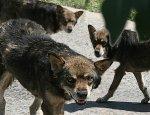 В Городищенском районе Волгоградской области собаки загрызли пенсионерку