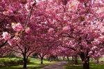 В Белой Калитве начали цвести абрикосы
