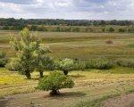 Волго-Ахтубинскую пойму ждет самое засушливое лето
