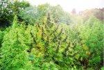 Житель Белокалитвинского района понесет ответственность за сбыт наркотика