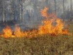 На территории Волгоградской области сохраняется высокая пожароопасность