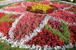 В Сочи на городских клумбах  160 тысяч цветов